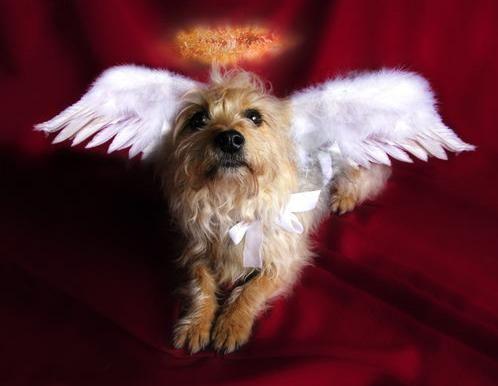 dog pet canine pope francis heaven angel paradise soul catholic animal