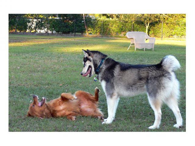 submissive dog behavior