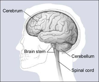 Brain Architecture and Williams Syndrome | Psychology Today