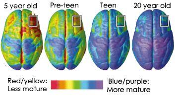 Adult Brain Development 53