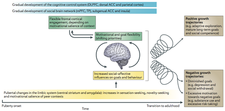 Schematic depiction of the brain changes during adolescence