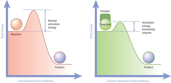 Insights from Chemistry into how 'Nudges' Impact Decisions ...