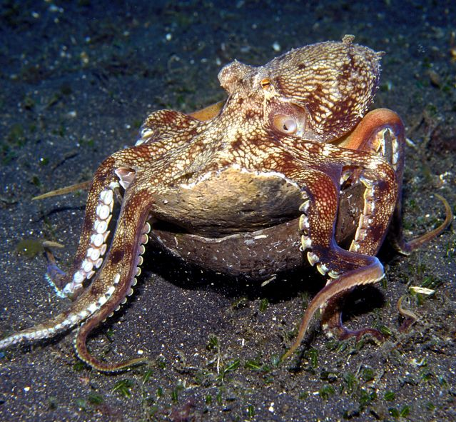 strategies for bargain hunting lessons from the octopus