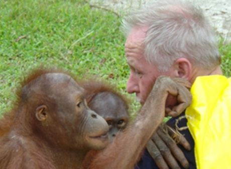 orangutan looks into human eyes