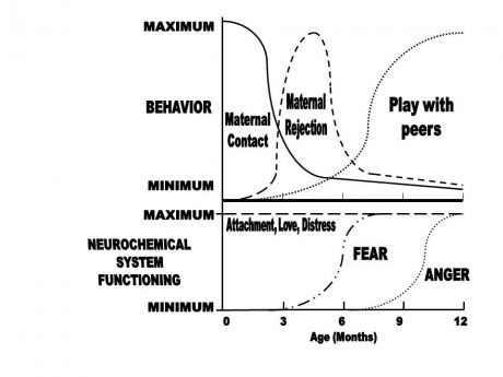 Biological maturation psychology
