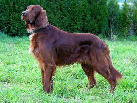 What Do Irish Setters And Girls Named Jennifer Tell Us About The