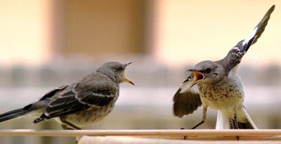 Arguing birds