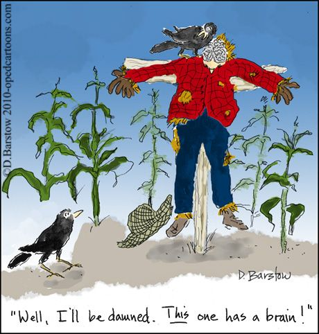 crows find a brain in a scarecrow