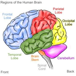 How To Grow A Child S Brain Psychology Today Singapore