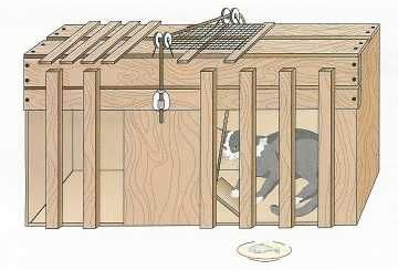 E L Thorndike Cat Puzzle Box