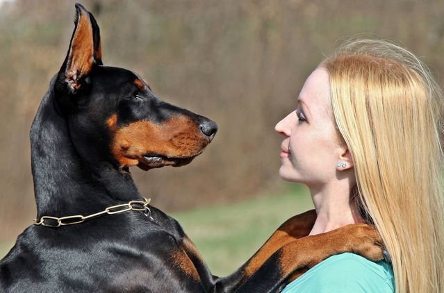 Image of: Eat Creative Commons License Cc0 Psychology Today How Do Dogs Recognize Human Faces Psychology Today