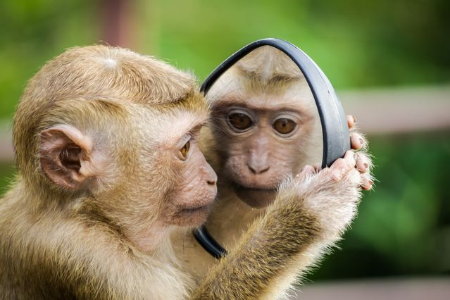 The Secret to Taming Your Monkey Mind