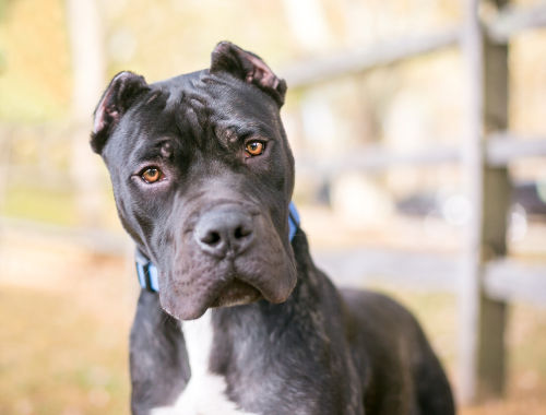 14 Dog Breeds Blacklisted By Insurance