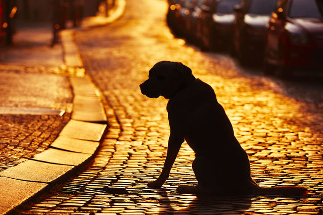 Tragic Sudden Unexpected Grieving For Traumatic Pet Loss