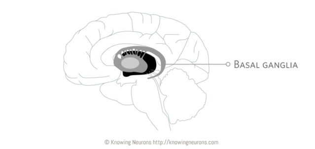 Jooyeun Lee, Knowing Neurons