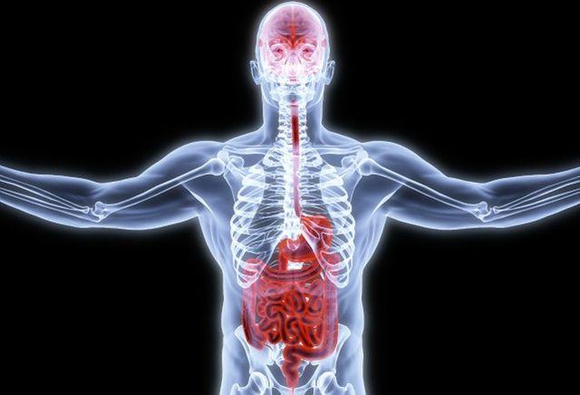 Can Gut Bacteria Control Mental Health?