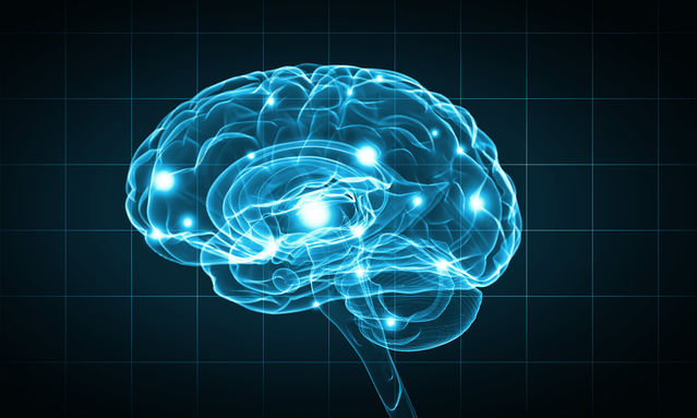 Brain development sexuality