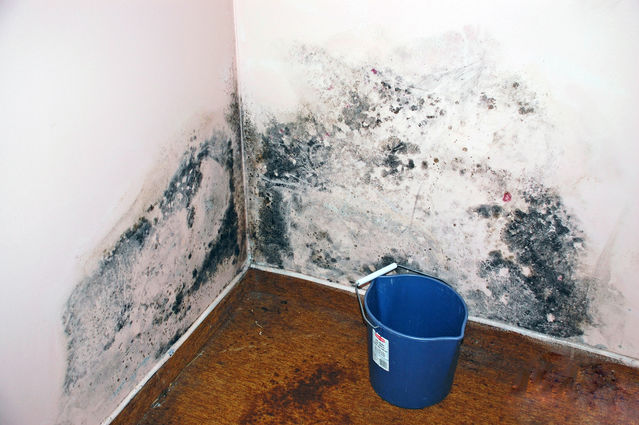 Mold Toxicity A mon Cause of Psychiatric Symptoms