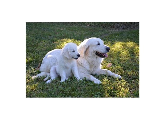 boy (dog) meets girl (dog) online