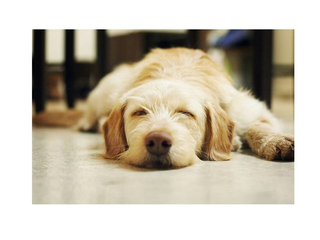 Do Dogs Dream Psychology Today