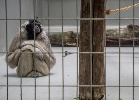 zoos should be abolished debate