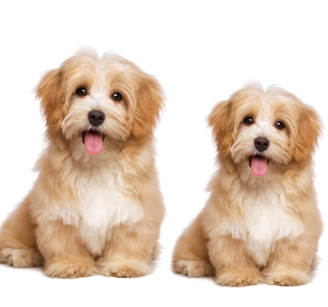 Why Does Cloning Your Dog Just Seem Wrong? | Psychology Today