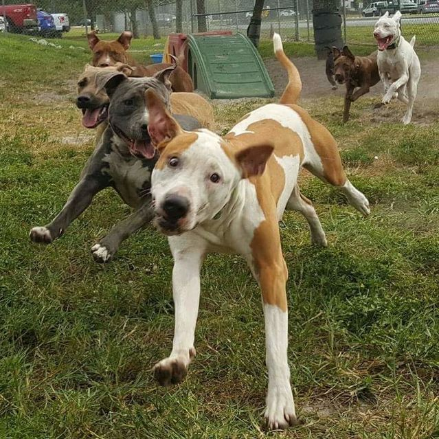 The Power and Importance of Social Play For Sheltered Dogs