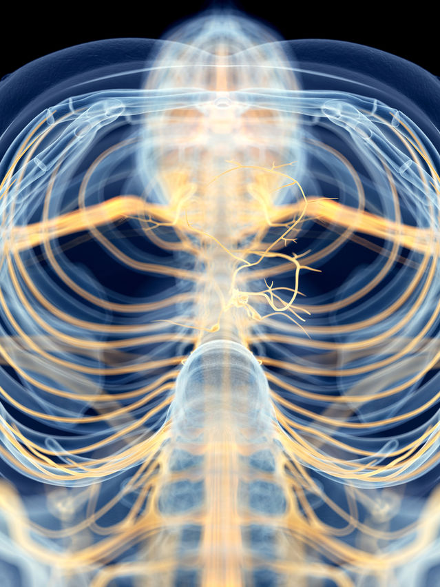 Guts, Wits, Microbiome, and the Vagus Nerve