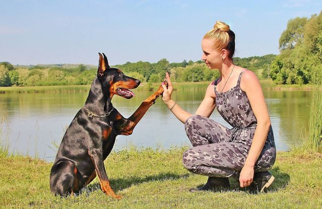 What Your Dog Can Teach You About Relationships