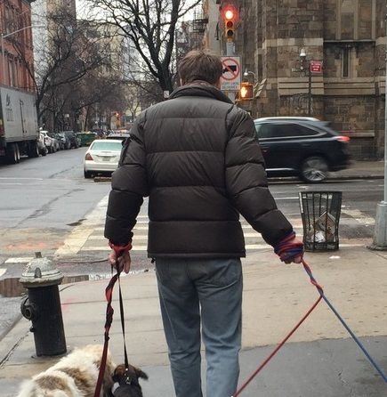The Village Diaries : Stories of a Dog Walker