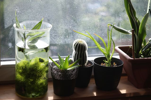 11 Ways Plants Enhance Your Mental and Emotional Health