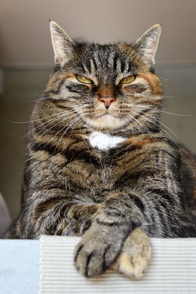How Long Is Too Long to Leave a Cat Alone? - Psychology Today