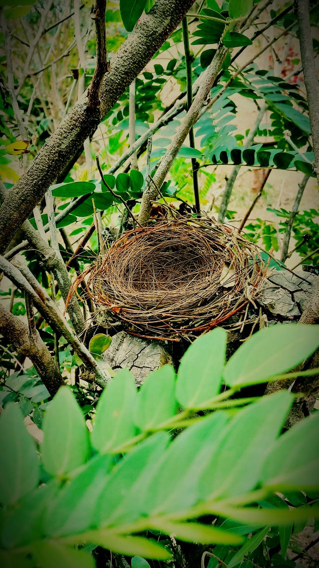 Preparing for an Empty Nest in 2020