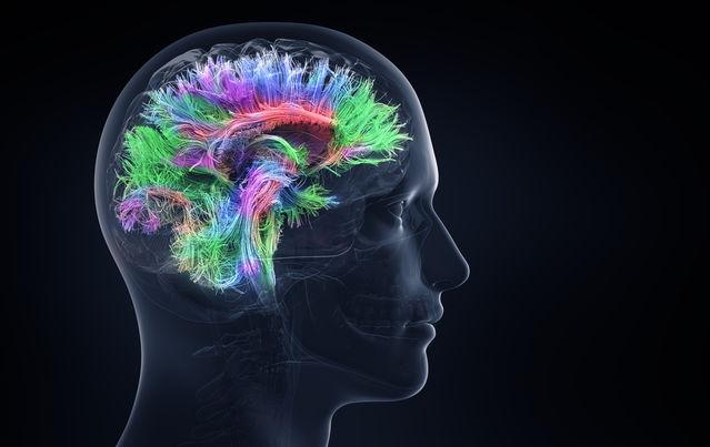 Intelligence Is a Whole-Brain Phenomenon