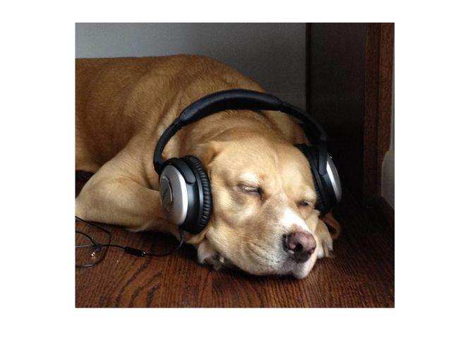 Do Dogs Get Alzheimer S