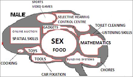 Male Brain Sex 21