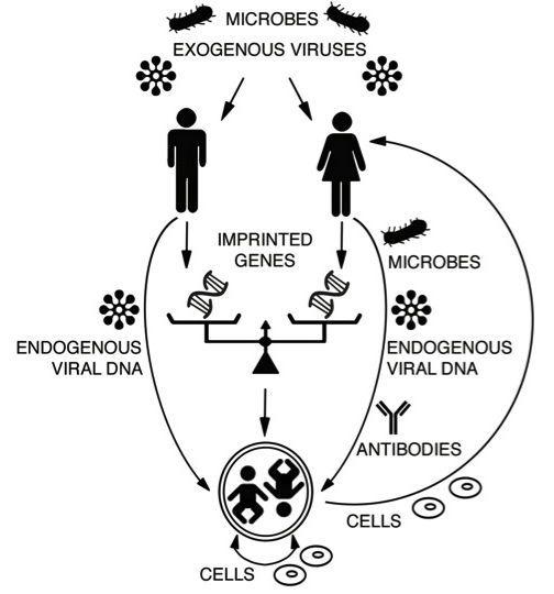 How Microbes, Viruses, Imprinted Genes, etc. Shape