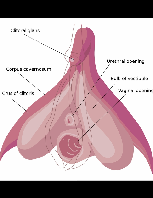 Vaginal vs clitoris orgasm
