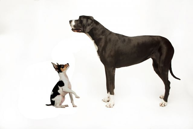 Small Dogs With Big Bark