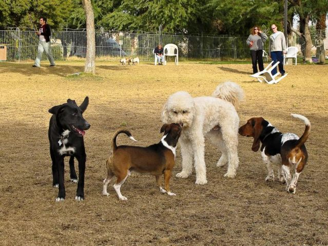 Butts And Noses Secrets And Lessons From Dog Parks