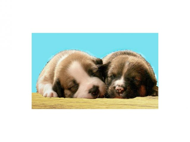 Why are puppies born with their eyes and ears closed? | Psychology Today