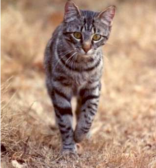 Cats: Owners Say Let Them be Predators and Kill Wildlife