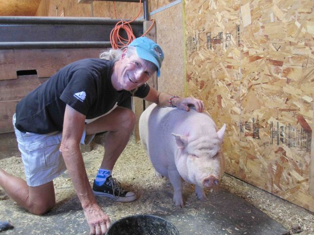 Pigs Are Intelligent, Emotional, and Cognitively Complex