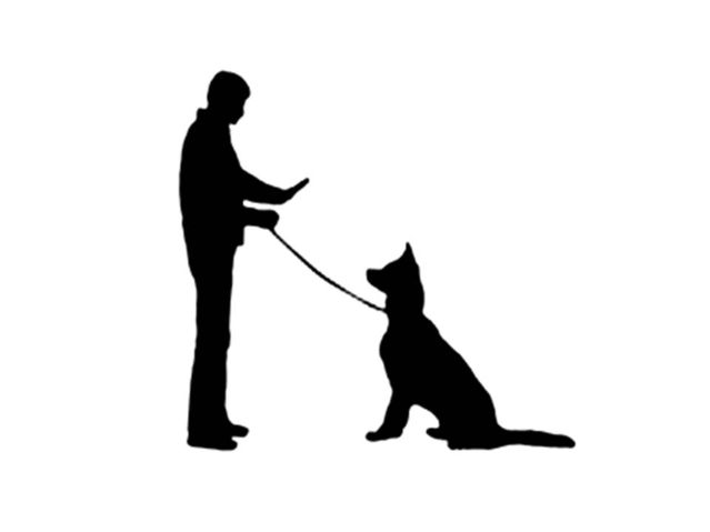 are voice commands or hand signals more effective for dogs