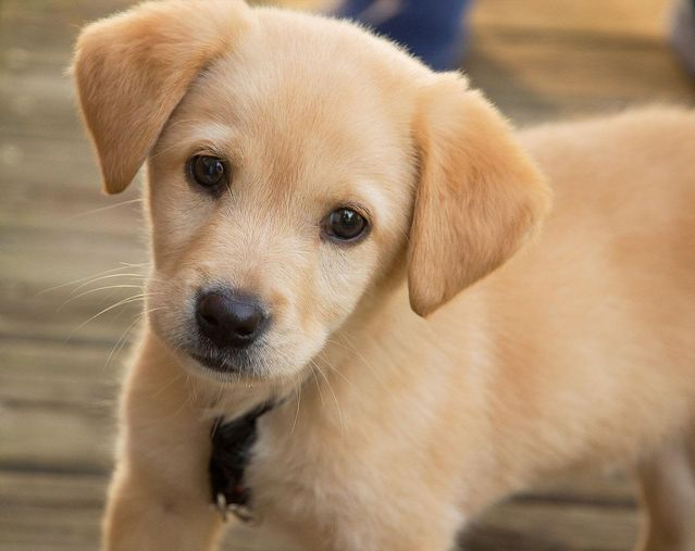 of puppies play and the pursuit of creative insights psychology