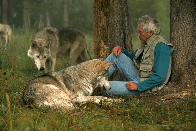 Courtesy of Jim and Jamie Dutcher & Living with Wolves.