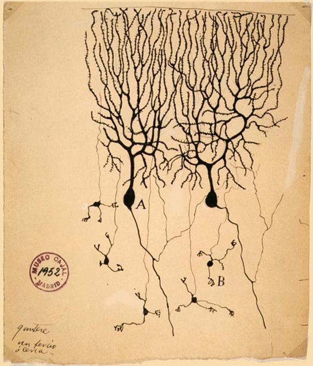 Santiago Ramón y Cajal, 1899. Instituto Santiago Ramón y Cajal, Madrid, Spain