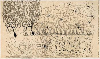 Cajal/Wikimedia commons