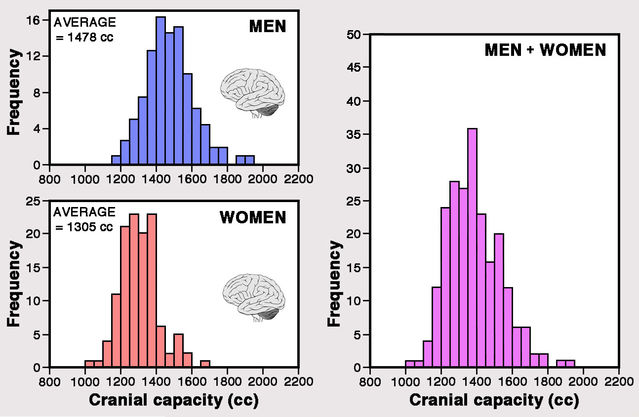 Histograms generated by the author using data gathered from the Human skull collection at the Musée de l'Homme, Paris (France).
