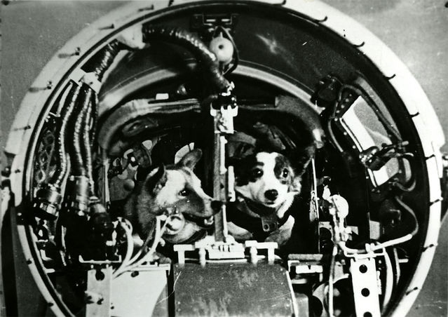 Dogs in the Space Program   Psychology Today